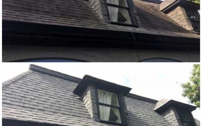 Those Black Spots on Your Roof Are Alive